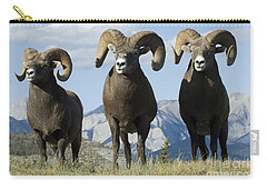 Big Horn Sheep Carry-all Pouch by Bob Christopher