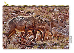 Carry-all Pouch featuring the photograph Bighorn Canyon Sheep Trio by Janice Rae Pariza