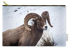 Carry-all Pouch featuring the photograph Bighorn Ram by Michael Chatt