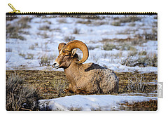 Carry-all Pouch featuring the photograph Bighorn Sheep by Greg Norrell