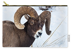 Carry-all Pouch featuring the photograph Bighorn Sheep by Michael Chatt