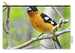 Blach-headed Grosbeak Carry-all Pouch