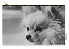 Black And White Portrait Of Pixie The Pomeranian Carry-all Pouch