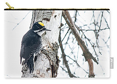 Black-backed Woodpecker Carry-all Pouch by Cheryl Baxter