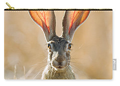Black-tailed Hare Davis California Carry-all Pouch by Doug Herr