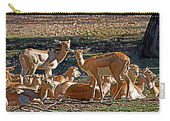 Blackbuck Female And Fawns Carry-all Pouch by Miroslava Jurcik