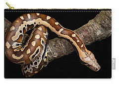 Blood Python Python Brongersmai Carry-all Pouch