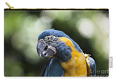 Blue And Gold Macaw V5 Carry-all Pouch by Douglas Barnard