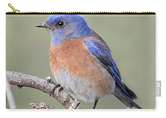 Blue Bird At Sedona Carry-all Pouch