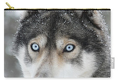 Blue Eyes Husky Dog Carry-all Pouch by iPics Photography