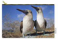 Blue-footed Booby Courting Couple Carry-all Pouch by Tui De Roy