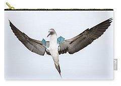 Blue-footed Booby Landing Galapagos Carry-all Pouch by Tui De Roy