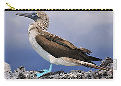Blue-footed Booby Carry-all Pouch by Tony Beck