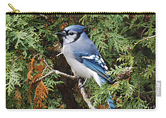 Carry-all Pouch featuring the photograph Blue Jay In Cedar Tree by Brenda Brown