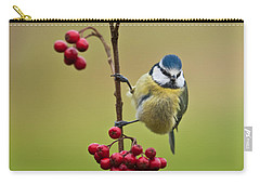 Blue Tit With Hawthorn Berries Carry-all Pouch by Liz Leyden