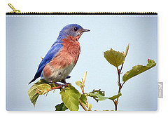 Carry-all Pouch featuring the photograph Bluebird On Top by Kerri Farley