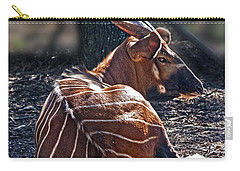 Bongo Carry-all Pouch by Miroslava Jurcik