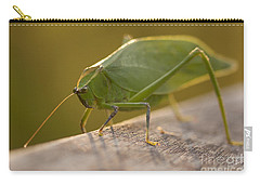 Broad-winged Katydid Carry-all Pouch by Meg Rousher