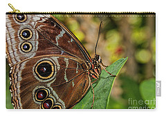 Carry-all Pouch featuring the photograph Blue Morpho Butterfly by Olga Hamilton