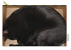 Carry-all Pouch featuring the photograph Cat In The Box by Kerri Mortenson