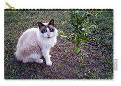 Carry-all Pouch featuring the photograph Cat 'n Orange Tree by Joseph Baril