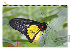 Carry-all Pouch featuring the photograph Common Birdwing Butterfly by Judy Whitton