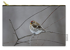 Carry-all Pouch featuring the photograph Common Redpoll by David Porteus