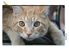 Cool Cat Named Calvin Carry-all Pouch