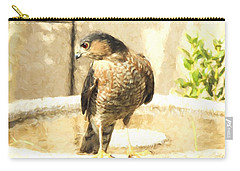 Cooper's Hawk At The Birdbath Carry-all Pouch by Jayne Wilson