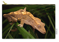 Crested Gecko Rhacodactylus Ciliatus Carry-all Pouch