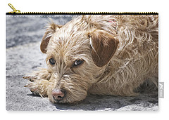 Carry-all Pouch featuring the photograph Cruz You Looking At Me by Thomas Woolworth