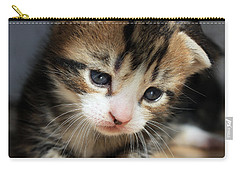 Carry-all Pouch featuring the photograph Daydreamer Kitten by Terri Waters