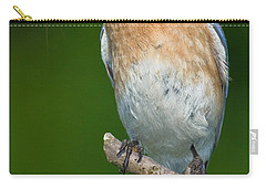 Carry-all Pouch featuring the photograph Eastern Bluebird With Katydid by Jerry Fornarotto