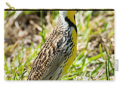 Eastern Meadowlark Carry-all Pouch