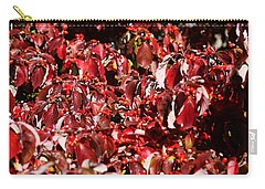 Fall Foliage Colors 08 Carry-all Pouch