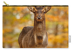 Fallow Deer In Autumn Forest Carry-all Pouch