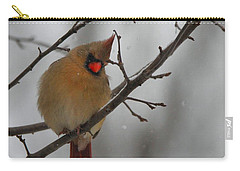 Female Cardinal In Winter Carry-all Pouch by Dan Sproul