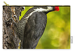 Carry-all Pouch featuring the photograph Female Pileated Woodpecker No. 2 by Belinda Greb