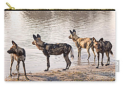Carry-all Pouch featuring the photograph Four Alert African Wild Dogs by Liz Leyden