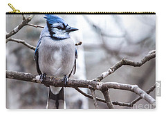 Gorgeous Blue Jay Carry-all Pouch by Cheryl Baxter