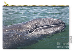Gray / Grey Whale Eschrichtius Robustus Carry-all Pouch by Liz Leyden