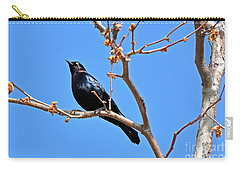 Great-tailed Grackle On A Sunny Spring Day Carry-all Pouch by Susan Wiedmann