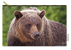 Grizzly Portrait Carry-all Pouch by Stanza Widen