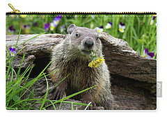 Groundhog  Kit Marmota Monax Carry-all Pouch by Debbie Dicarlo