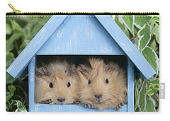 Guinea Pig In House Gp104 Carry-all Pouch by Greg Cuddiford