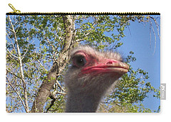 Ostrich Here's Looking At You Carry-all Pouch by Belinda Lee