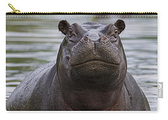Hippopotamus Bull Khwai River Botswana Carry-all Pouch by Vincent Grafhorst