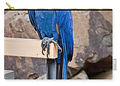 Hyacinth Macaw Parrot Bird Art Prints Carry-all Pouch