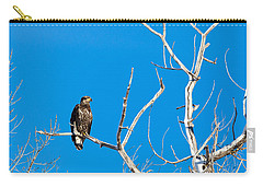 Carry-all Pouch featuring the photograph Immature Bald Eagle by Michael Chatt