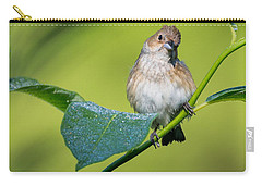 Indigo Bunting Female Carry-all Pouch by Bill Wakeley